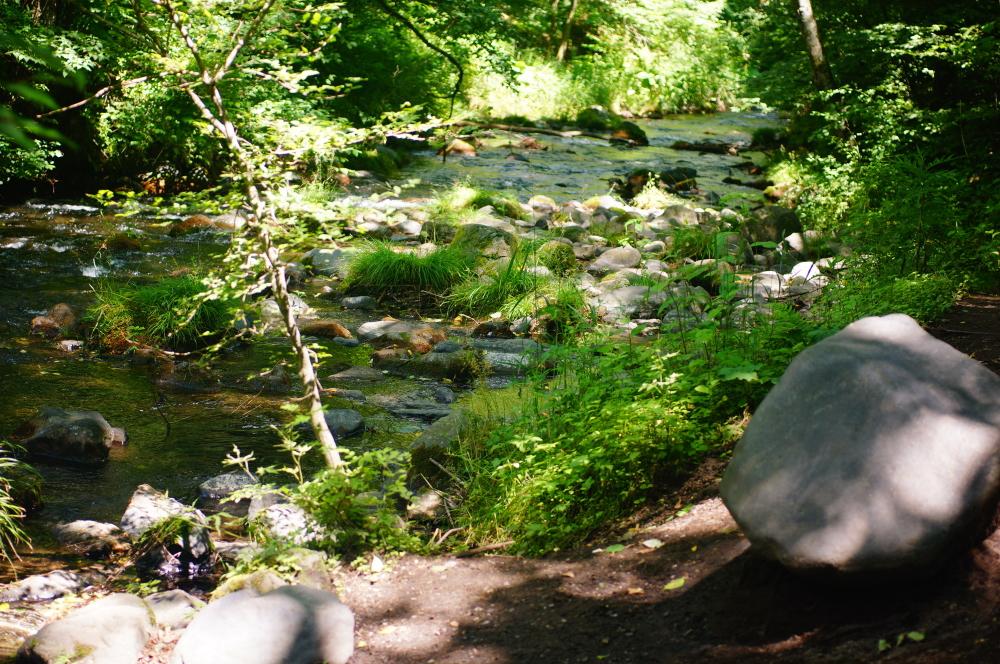 ハルニレテラス裏の川