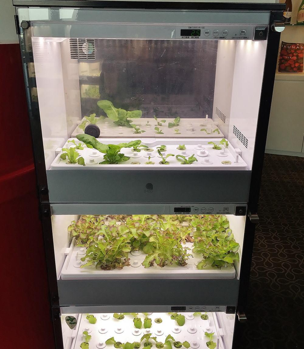 ウトコ オーベルジュ スパ 海洋深層水で育てる野菜
