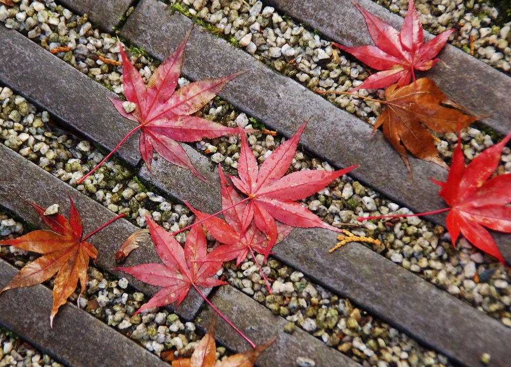 星のや京都 奥の庭 瓦