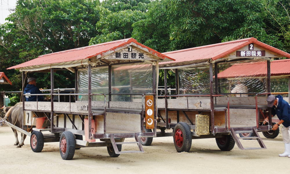 新田観光 水牛乗り場
